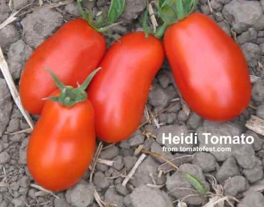 4 red heidi tomatoes from tomatofest