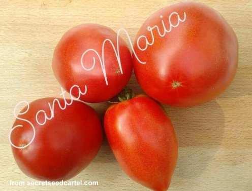 santa maria paste tomatoes