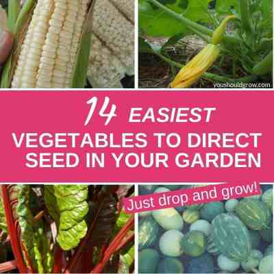 14 Vegetables That Are Easy To Grow From Seed