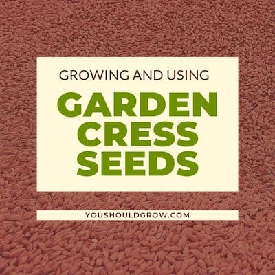 stock image of seeds in background. Text overlay: growing and using garden cress seeds youshouldgrow.com