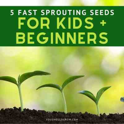 5 Fast Sprouting Seeds To Grow (For Kids + Beginners)