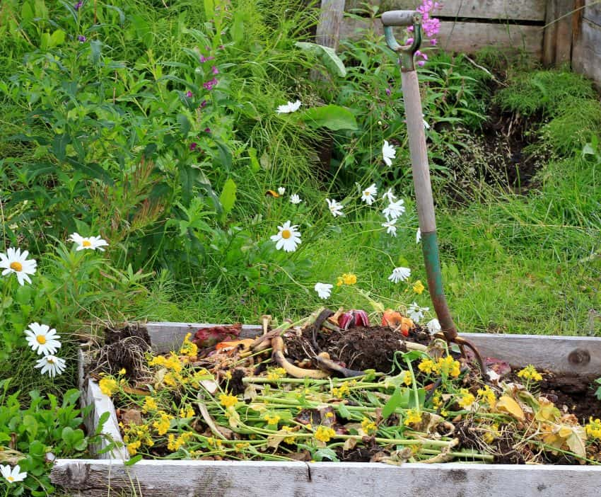 Compost pile with ingredients for compost on the top.