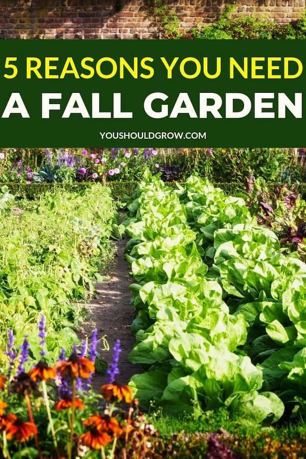 If you haven't thought about a fall garden, you absolutely should. Here are five reasons why. #fall #fallgarden #harvest #fall #gardentips #homestead