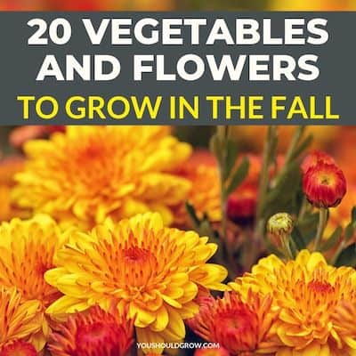 Fall Garden Plants – Vegetables & Flowers