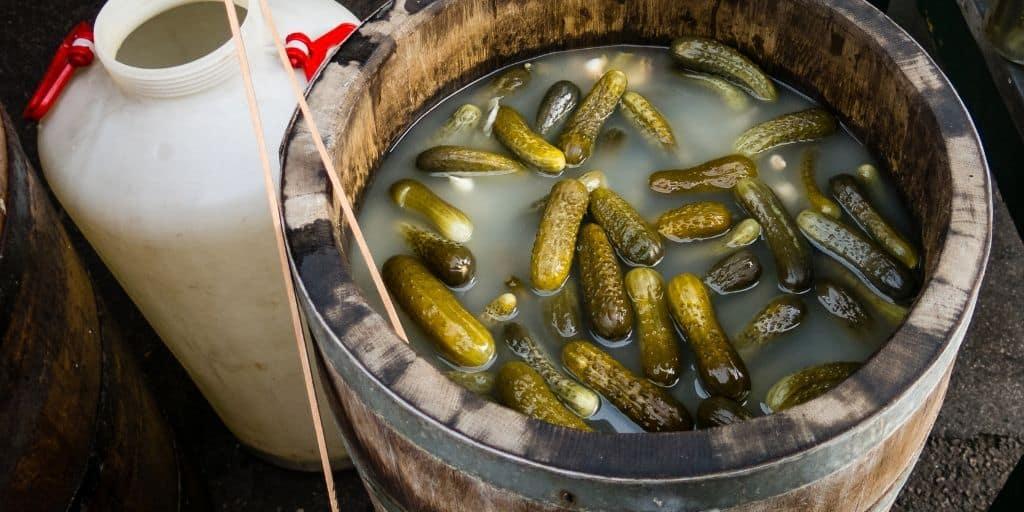 Wine cask full of fermenting pickles