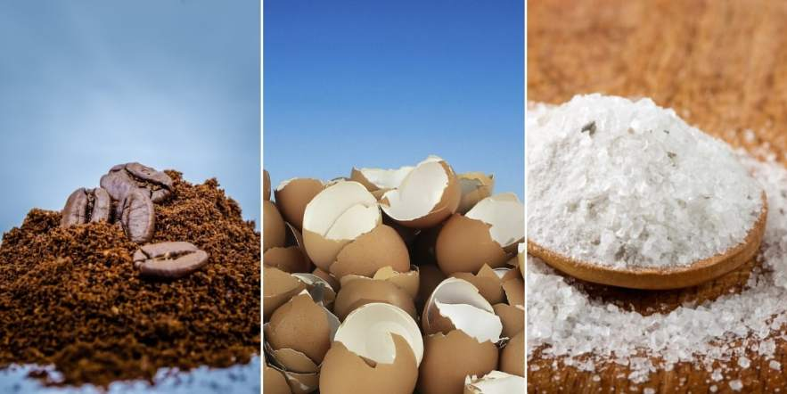 coffee grounds eggshells and epsom salt for fertilizing