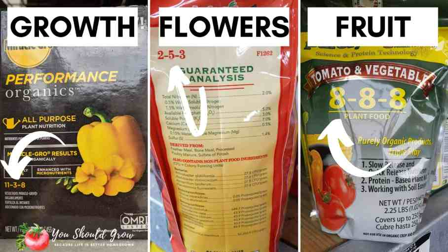 fertilizers for growing tomatoes