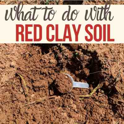 Gardening In Red Clay Soil? You're Better Off Than You Think