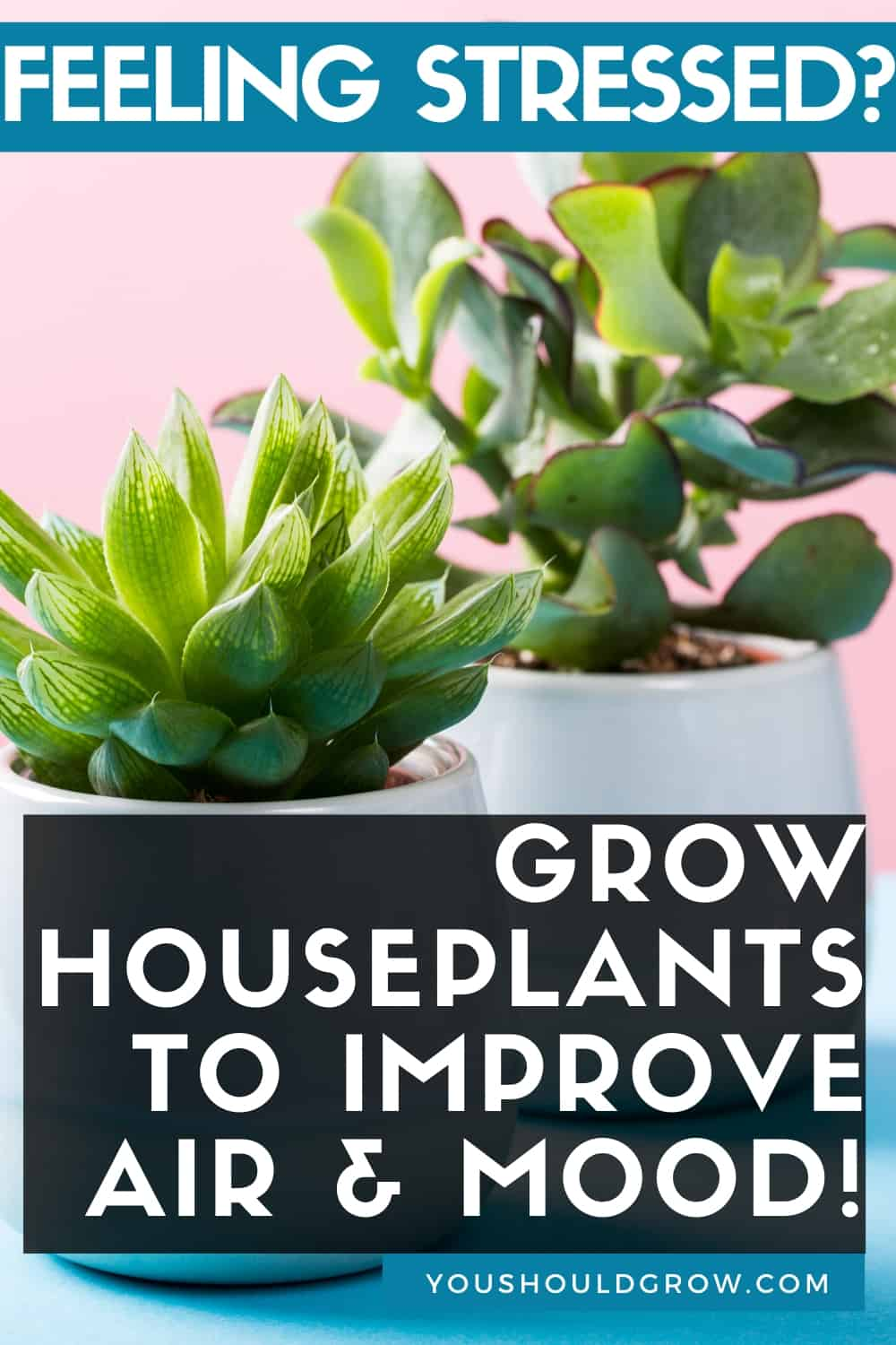 In times of stress, you can find relief by growing houseplants. Surrounding yourself with these peaceful living beings not only improves oxygen levels in your home but has proven benefits for anxiety and depression. Best houseplants for beginners, easy to grow plants, indoor gardening, garden therapy, low light houseplants, decorating with houseplants