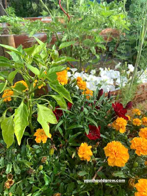 vegetables and flowers growing in a container looking healthy without using epsom salt