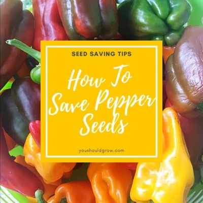 How To Save Pepper Seeds