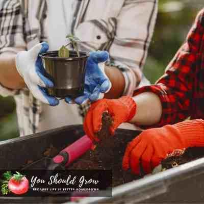 3 Best Garden Gloves To Buy