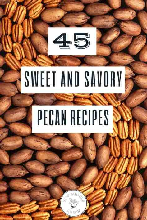 45 sweet and savory pecan recipes. Delicious recipes for dinner, holidays, and family gatherings. Get them all at YouShouldGrow.com