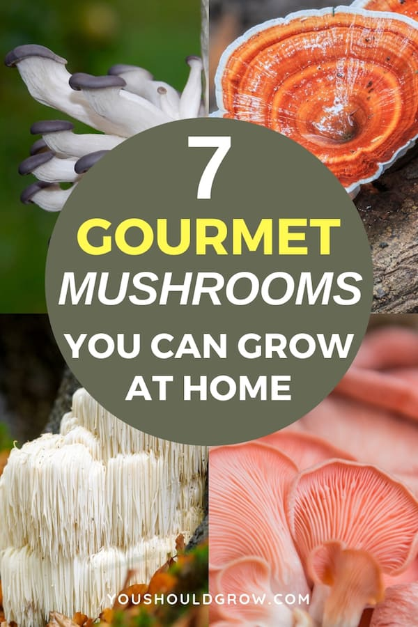 collage of mushrooms with text: 7 gourmet mushrooms you can grow at home