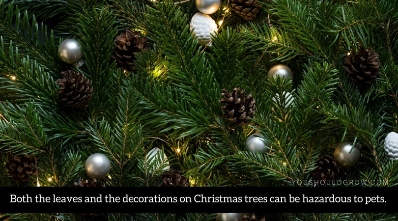 Both the leaves and the decorations on Christmas trees can be hazardous to pets.