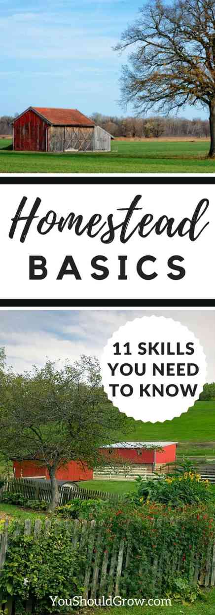 11 Homestead basics you need to know!
