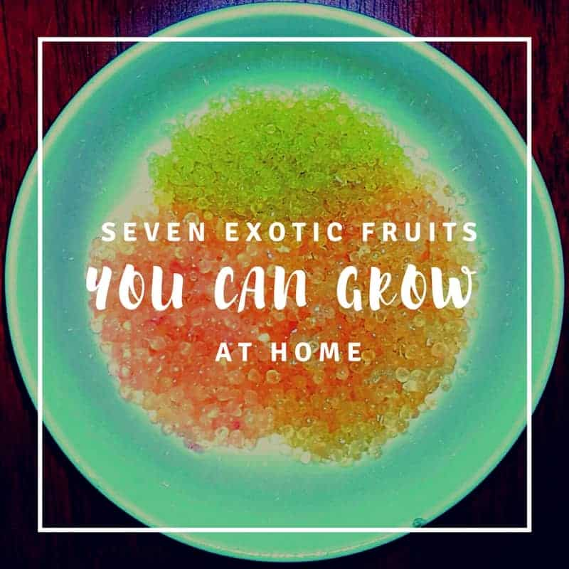 7 Exotic Fruits Grown in the USA | You Should Grow