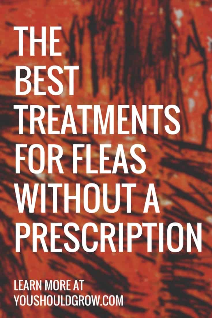 THE BESTtreatments for fleas without a prescription white text on red and black background.
