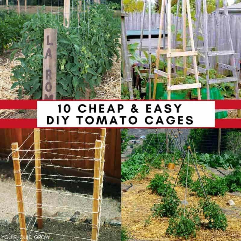 Cheap Ways To Do Your Garden: 10 Ideas For Homemade Tomato Cages (Cheap & Easy)