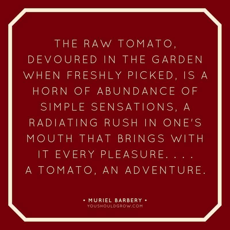 a tomato, an adventure quote