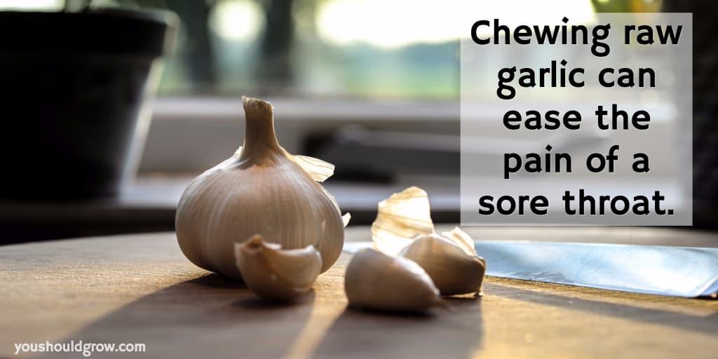 chew raw garlic home remedy sore throat