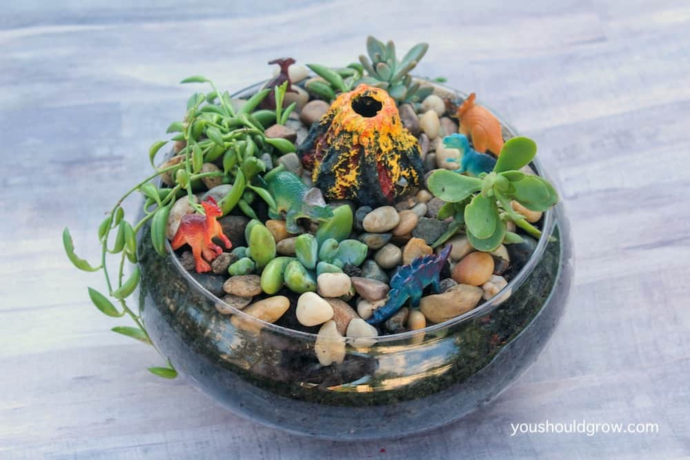 miniature succulent garden with dinosaurs