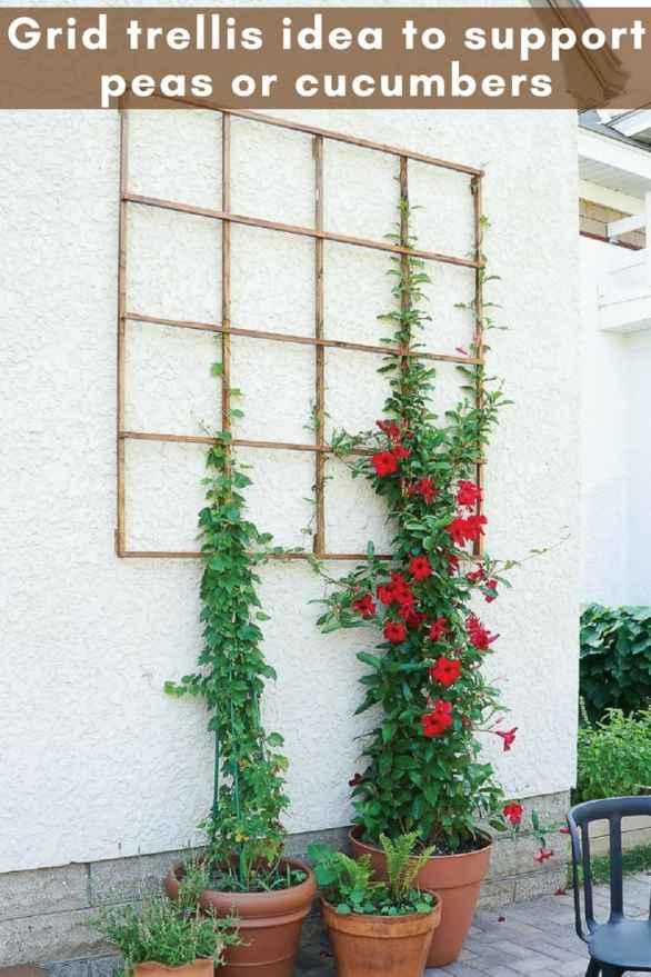 diy vertical garden_ grid trellis