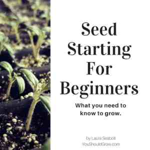 Seed Starting For Beginners