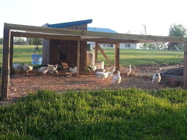 DIY chicken coop with run