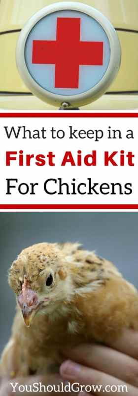 What to keep in a first aid kit for chickens