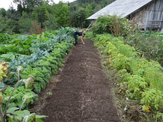 Planting and caring for your garden in the fall.
