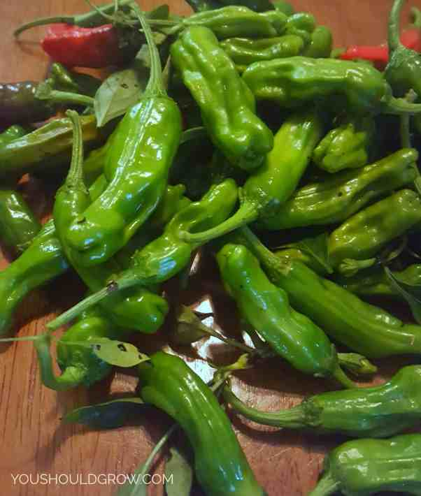 Shishito peppers are a sweet pepper with bright green skin and deep wrinkles.