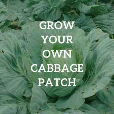 Grow Your Own Cabbage Patch