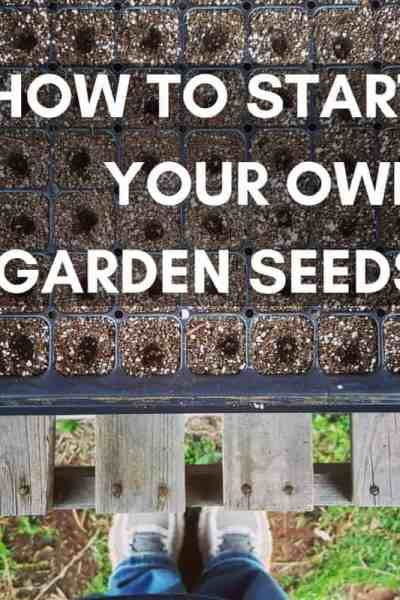 how to start your own garden seeds