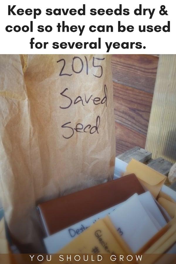 Seed starting - using saved seed.