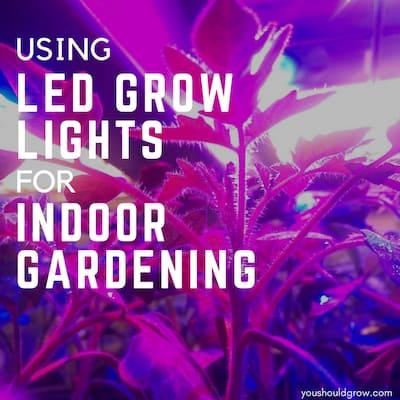 Using Full Spectrum LED Grow Lights For Indoor Gardening