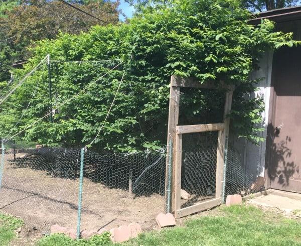 Chicken coop run off garage