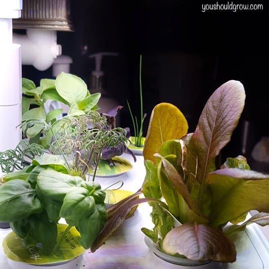 plants in aerogarden