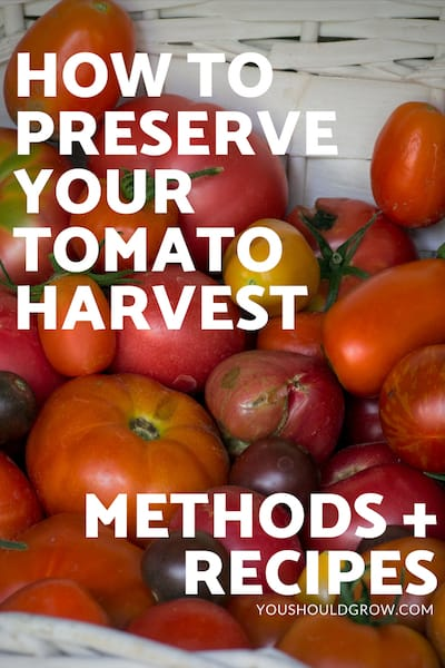 How to preserve your tomato harvest - methods + recipes. text in white overlaying image of basket of tomatoes.