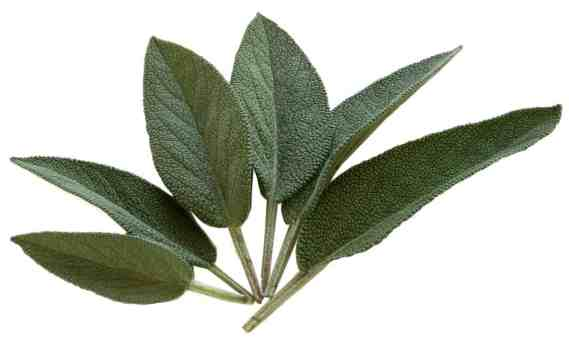 Herbs for holiday recipes