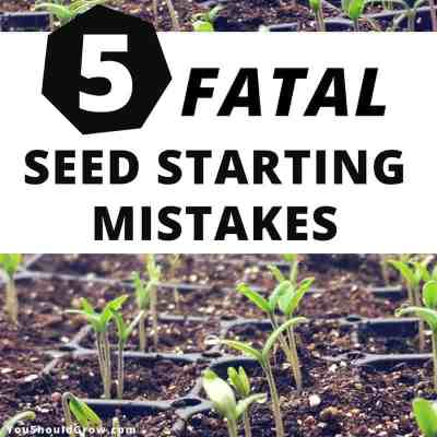 5 Fatal Mistakes For Germinating Seeds