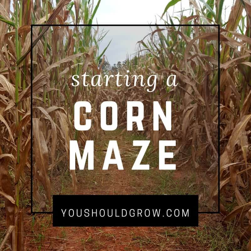Thinking Of Starting A Corn Maze? Read This First - You ...