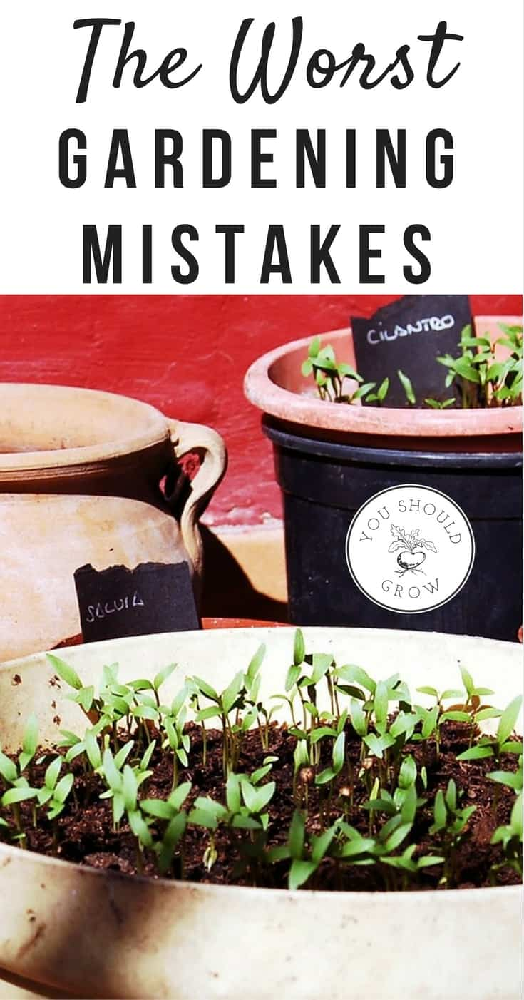 The 10 worst gardening mistakes you can make. Plus how to avoid making gardening mistakes.