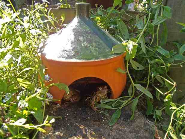 Gardening tips: Give toads a cozy space in your garden with this toad house.