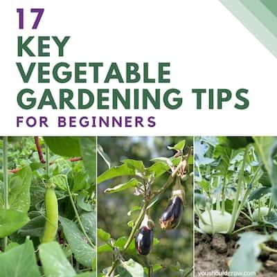 17 Key Vegetable Gardening Tips For Beginners