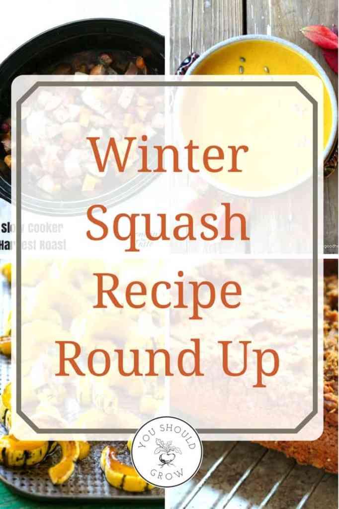 47 delicious winter squash recipes