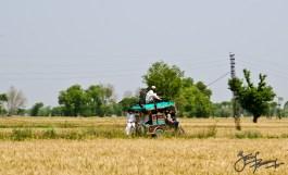 Rickshaw - the most popular transportation