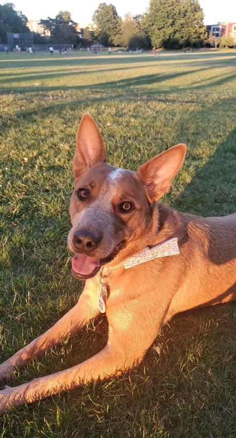 Briana's dog, Stinka!