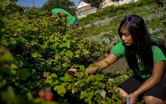 Mela Harvesting Raspberries