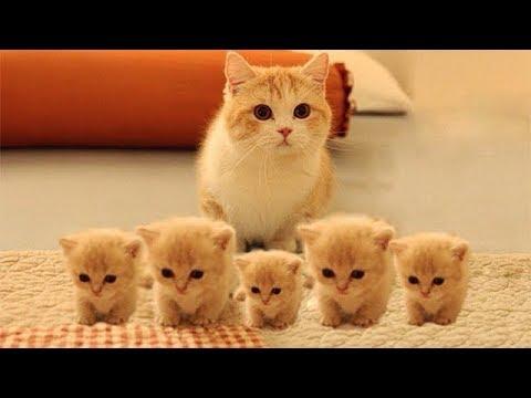 「かわいい猫」 笑わないようにしようとしてください – 最も面白い猫の映画 #157